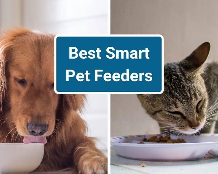 Best Smart Pet Feeders